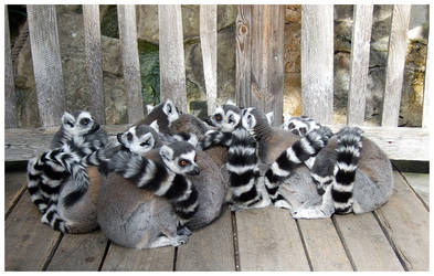 Lemurzzzzz by Art-By-Anders