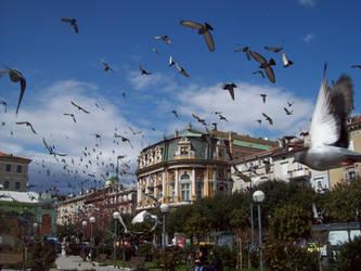 Crazy Pigeons by CenobiteAdnaloy