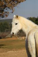 Horse by Eloniel