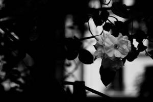Flower II by Eloniel