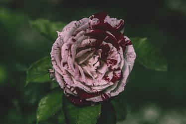 Flower III by Eloniel