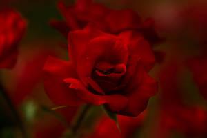 Red Bee by Eloniel