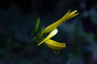 Flower V by Eloniel