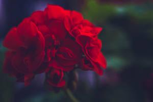 Flower VI by Eloniel
