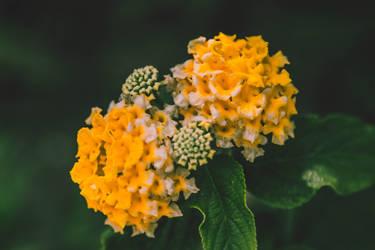 Flower IV by Eloniel