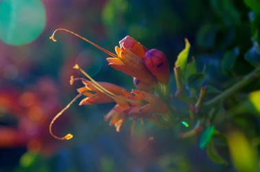 HDR Flower I by Eloniel