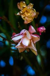 Flower XI by Eloniel