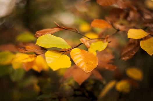 Autumn, my favorite spring