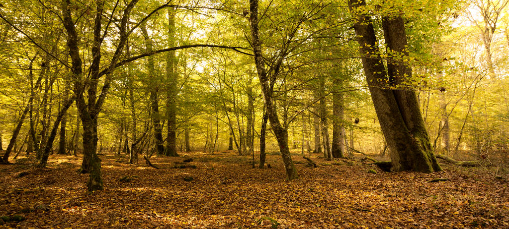 Forest by supmaite