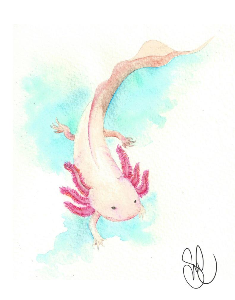 Axolotl by PhiaMatus