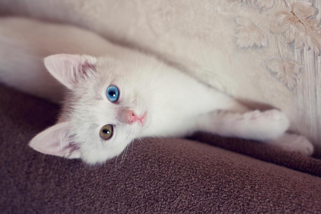 Можно ли коту есть петрушку