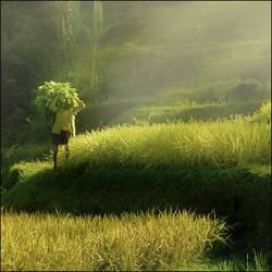 Morning Life by Jayantara