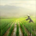 Farm by Jayantara