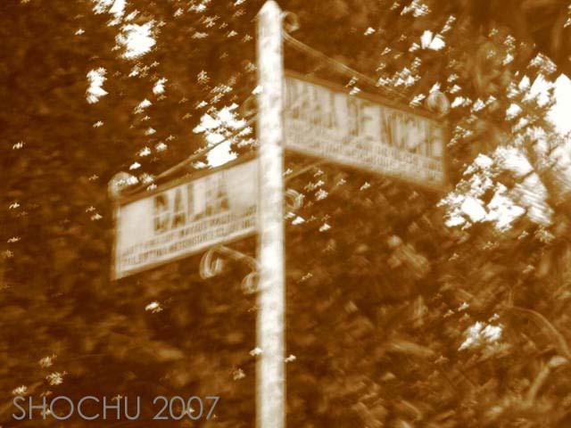 Dalia Street by ishbikita