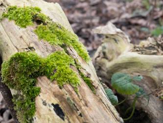 Moss by xxchelsea19981