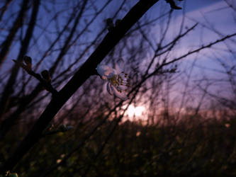 Sunset by xxchelsea19981