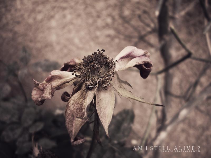 Am I still Alive ? by RawanS