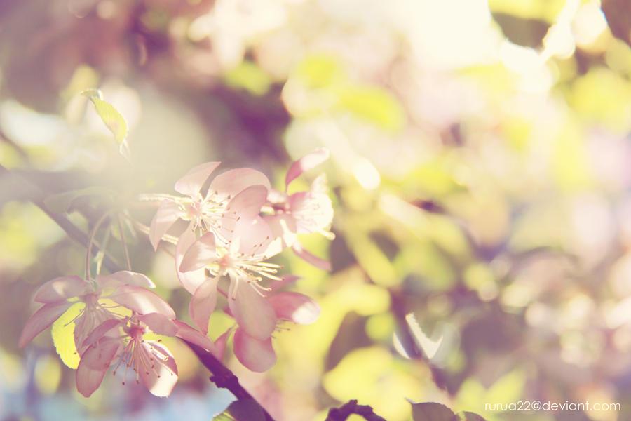 Spring Blossom By Rurua22 On DeviantArt