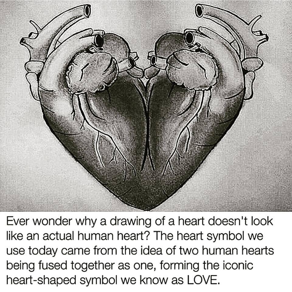 Origin Of The Heart Shape Symbol By Opallovestoslaughter On Deviantart