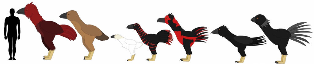 Kokinornis size comparison by Ball-of-Sugar
