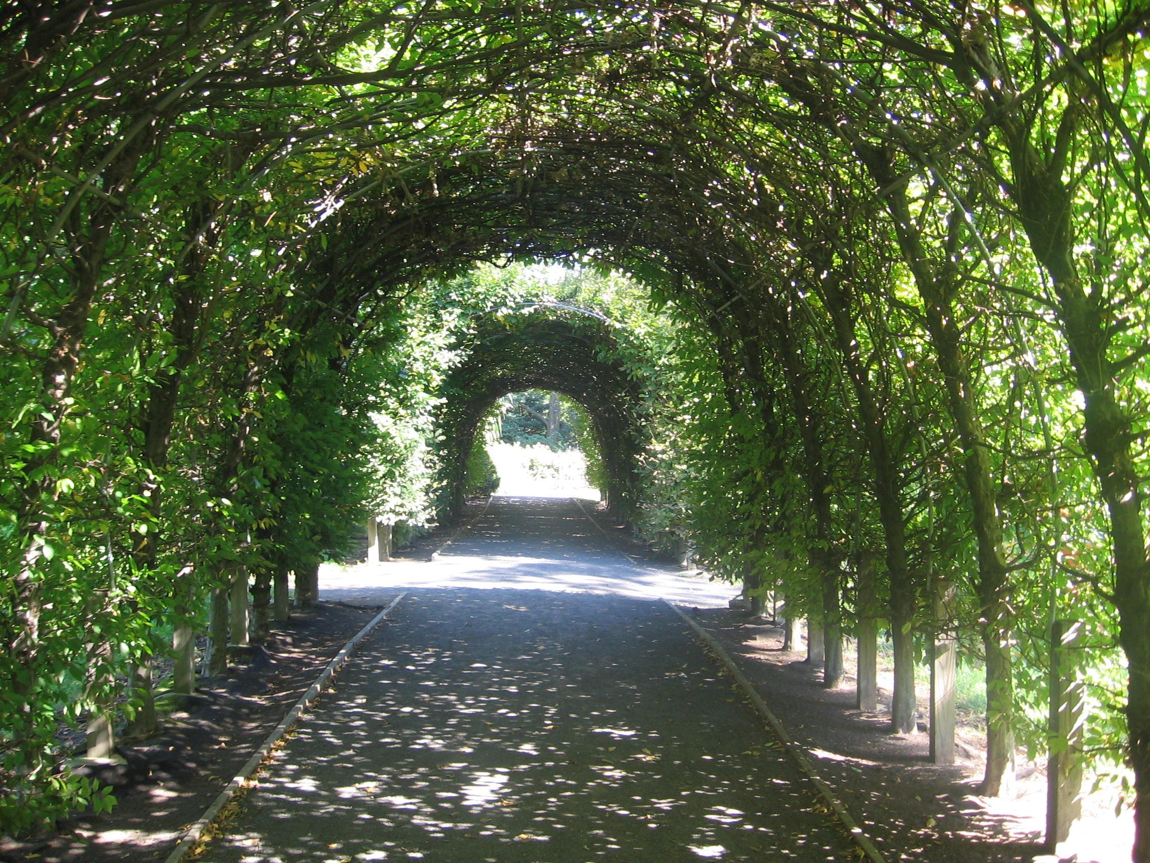 Awesome Backyard Arch