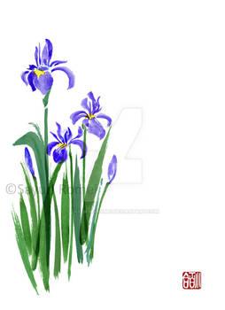 Siberian Irises - Commission