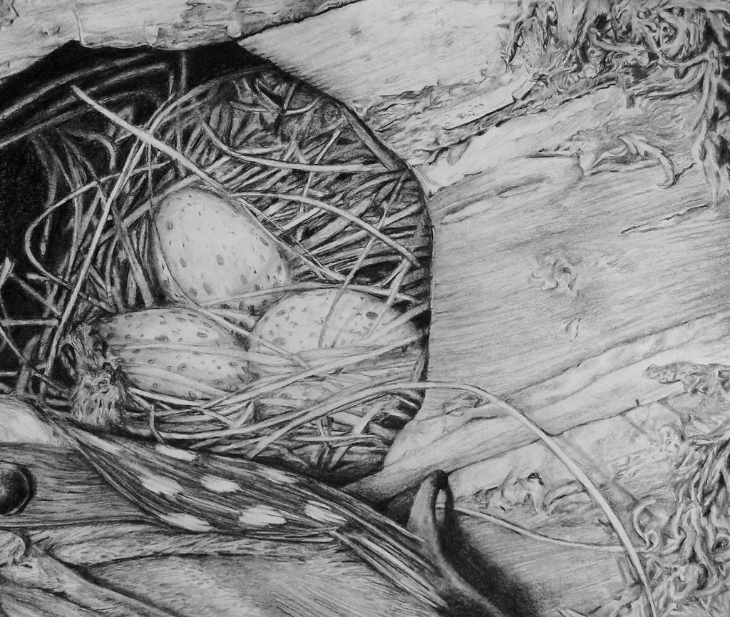 D Line Drawings Value : Bird house texture drawing by odd wad on deviantart