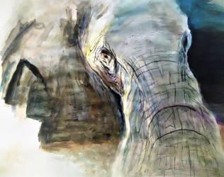 Elephant by quasar603