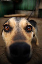 My Dog by sageata