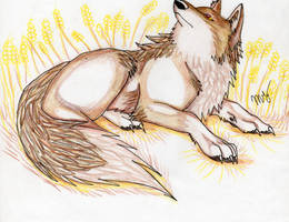 holo the wise wolf by Suenta-DeathGod