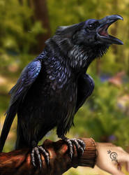 (1/2) Kai / Raven (Dream) by Irbisty