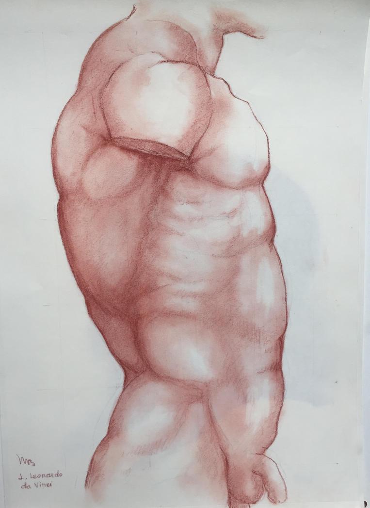 male  torso (sanguine) inspired from L. da Vinci by ClairObscur16