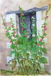 Roses tremieres en septembre