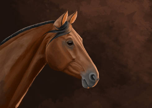 Warmblood portrait