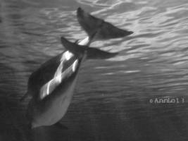 BW Bottlenose Dolphin Picture