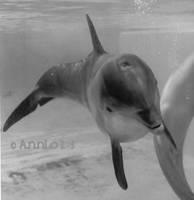 BW Bottlenose Dolphin Photo