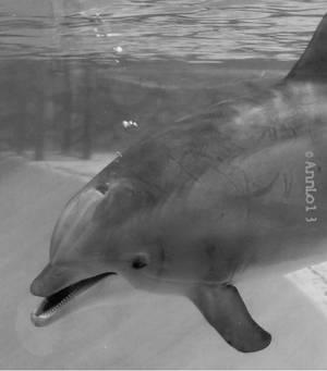 BW Dolphin Underwater