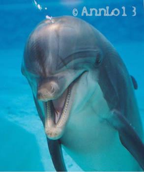 Sharky a bottlenose dolphin