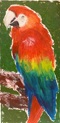 Parrot by maryemm57