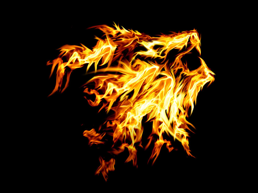 Lion Fire | www.pixshark.com - Images Galleries With A Bite!