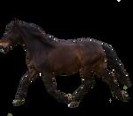 Horse Pre-Cut