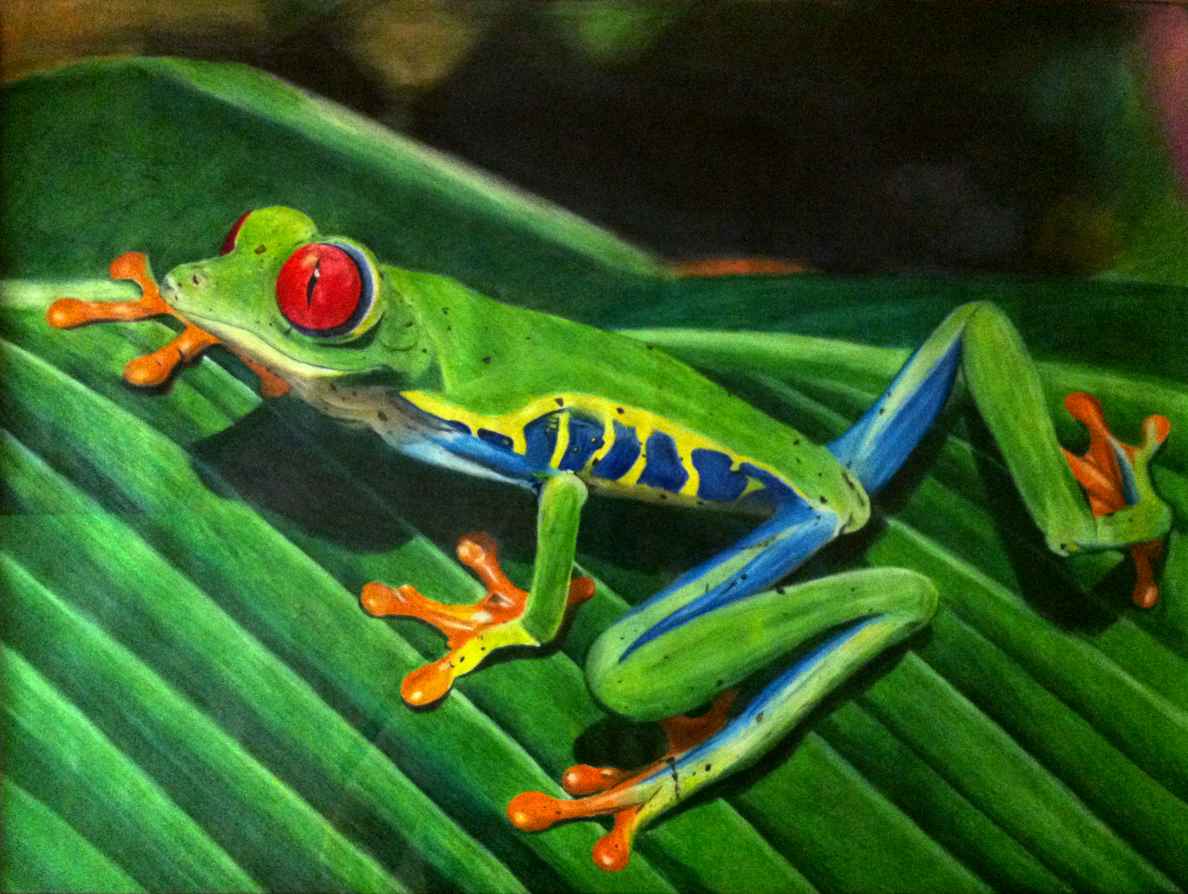 Uncategorized How To Draw A Red Eyed Tree Frog drawing ii red eyed tree frog by munjey86 on deviantart munjey86