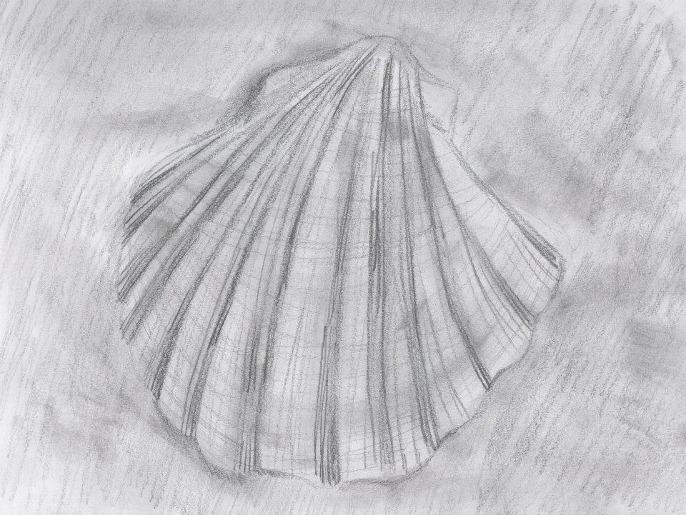Drawing I - Seashell by munjey86