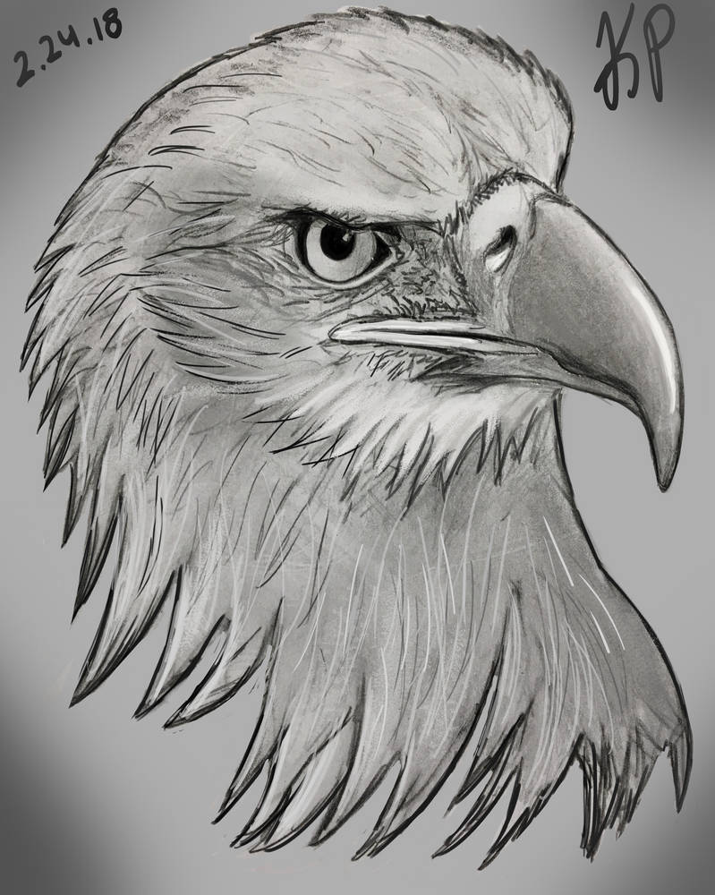 Eagle pencil drawing and wacom for final touches by kopap89 on