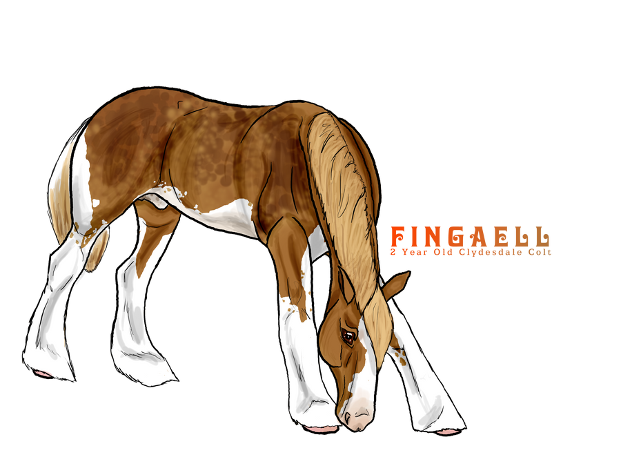 Fingaell - Co-owned by NewAgeStables