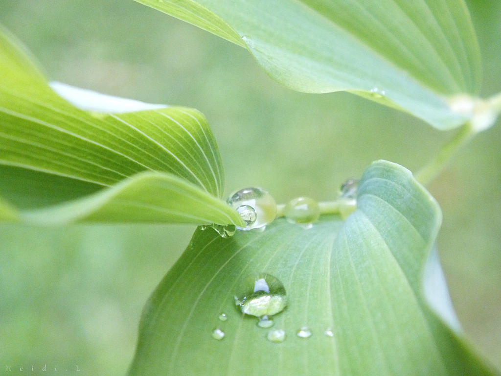 Dewdrops by Heidileh