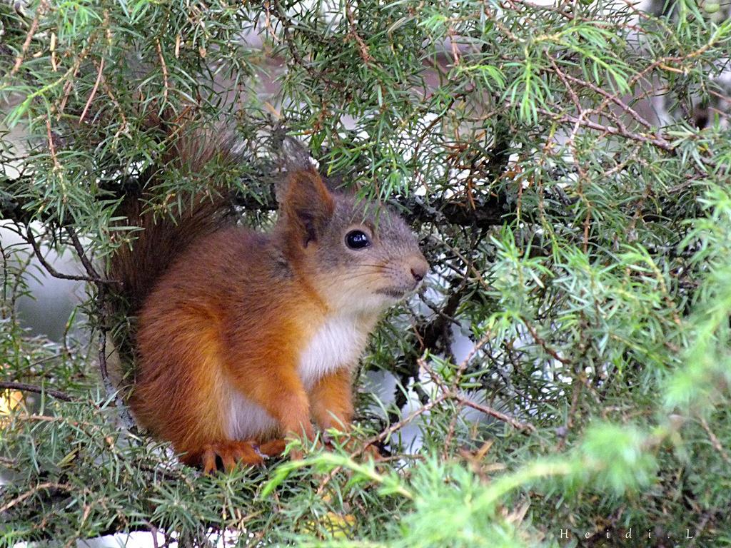 Baby Squirrel 1 by Heidileh