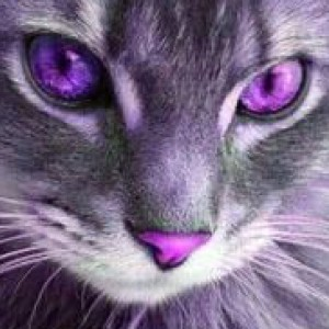 KittyCel's Profile Picture
