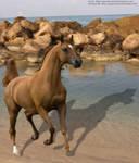 Rocky Arabian