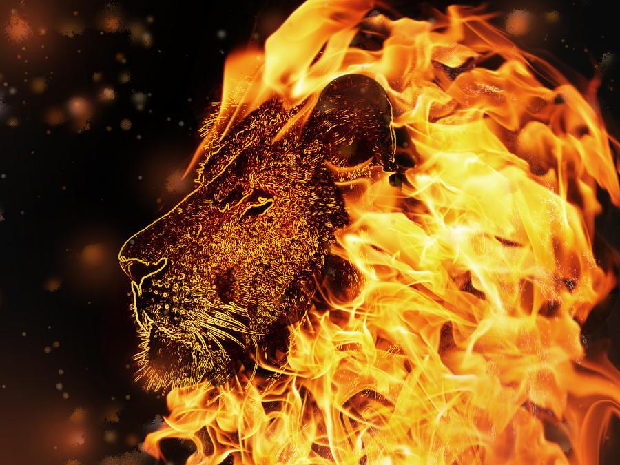 Lion Fire by 88reset on DeviantArt